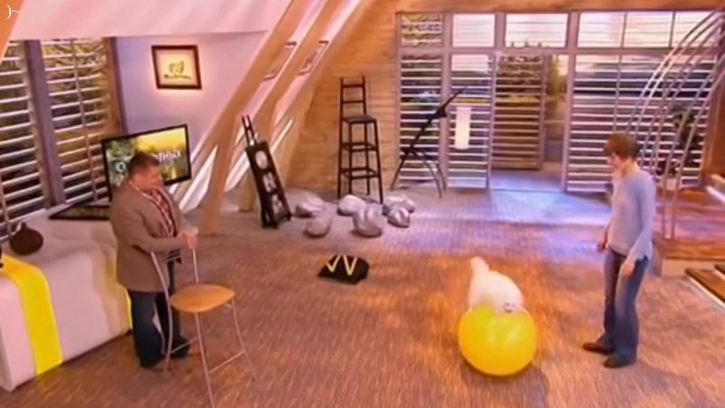 Диалоги о животных . Чудеса, да и только. Шпиц на шаре. » Freewka.com - Смотреть онлайн в хорощем качестве