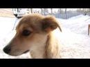 Пристроим собаку Джесси. Вятка Today 18.02.2015