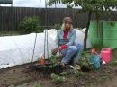 Выращивание томатов вертикальным способом