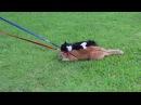 Simon the Cat Refuses To Dog