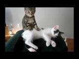 Лучшие смешные котики! 2015 (Смотреть первые 8 минут)
