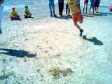 петушиный бой-кокосовый разгром_июнь 2015