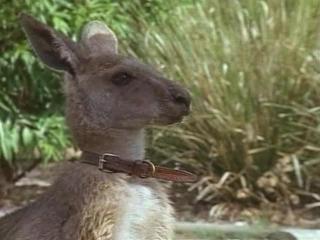 Приключения Скиппи / The Adventures of Skippy (1993 - 1994) (Австралия)