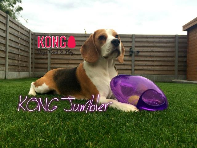 Funny Dog Toy Critic Louie The Beagle Episode 4 KONG JUMBLER