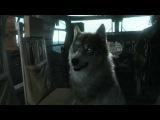 Metal Gear Solid V: The Phantom Pain – Трейлер «Диди»