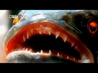 Nat Geo Wild: Змееголовый монстр / Речные монстры