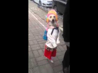 狗狗你要去哪里