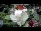 Абхаэия -страна души под музыку Абхазская лезгинка - !!. Picrolla