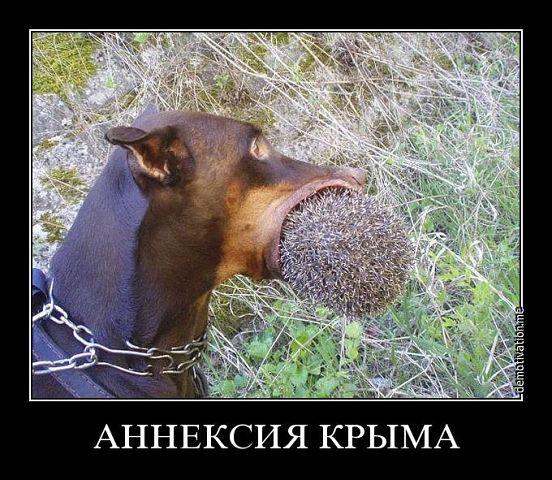 Кремлевская марионетка Аксенов возмутился из-за сине-желтых урн в оккупированной Керчи - Цензор.НЕТ 8594