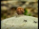 06 - a snail's dream