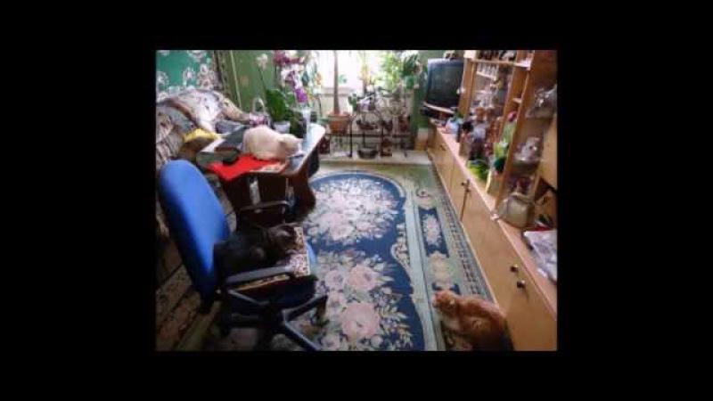 А у меня три кота Видео про Тихона Мачо и Геркулеса