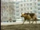 Собака которая ждала 8 лет своего хозяина хатико rus