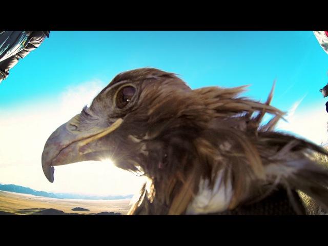 GoPro: Golden Eagle POV Flight in 2.7K