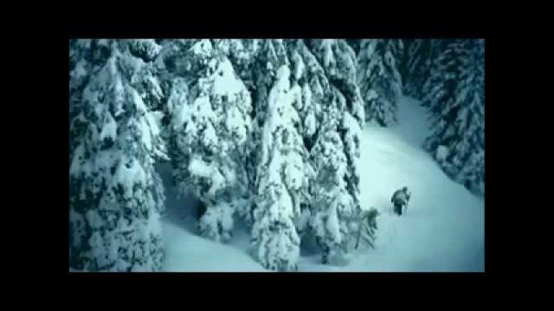 Волки и замерзший путник