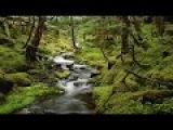 Лесной ручей. Звуки живой природы. Звуковая терапия, медитация, орнитотерапия. Forest Stream