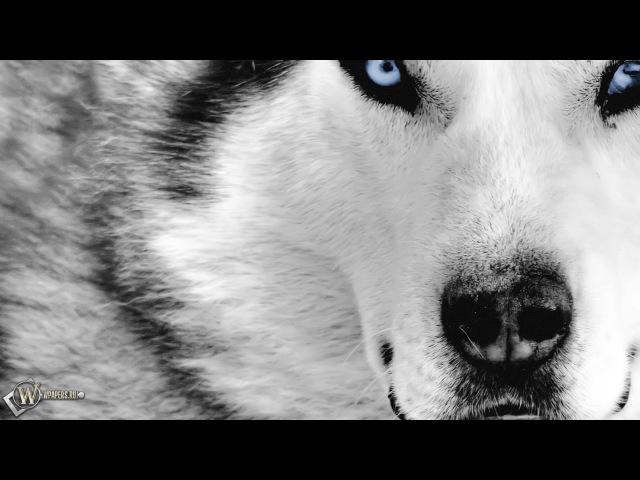 Правда о Собаках. Документальный фильм » Freewka.com - Смотреть онлайн в хорощем качестве