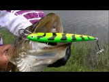 Pike attack Salmo underwater. Fishing with lures hard-baits strikes. Рыбалка щука атакует воблер.
