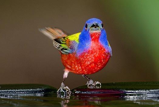 Интересное о птицах и не только   •° БУДЬ С НАМИ ° • •°