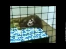 Необъяснимое Жуткая находка 18 Смотреть интересное видео, удивительное и невероятное Непознанное