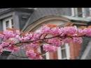 ИВ МОНТАН LA VIE EN ROSE Жизнь в розовом цвете