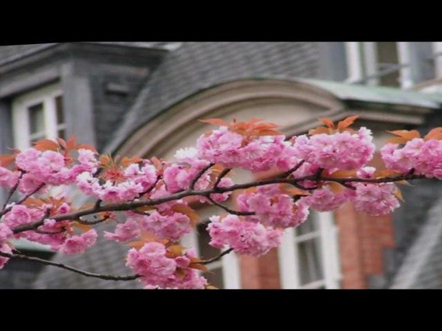 ИВ МОНТАН LA VIE EN ROSE (Жизнь в розовом цвете)