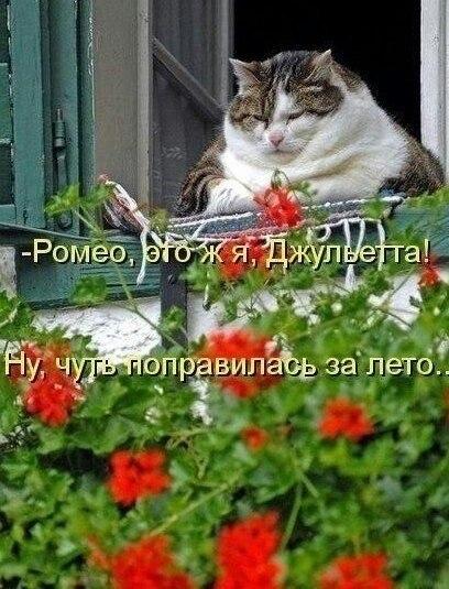 http://cs624618.vk.me/v624618246/64d/cCtN7fBkiyc.jpg