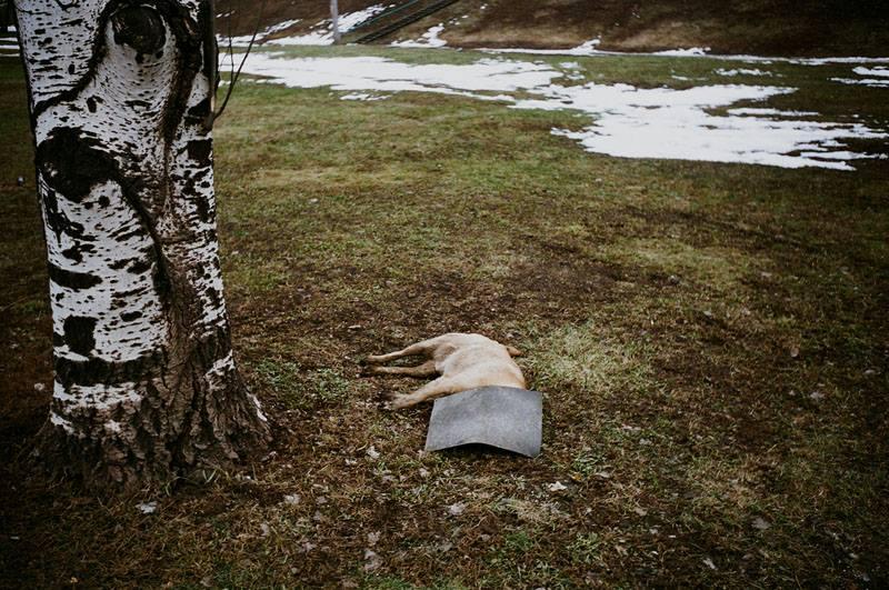 Смерть собачки
