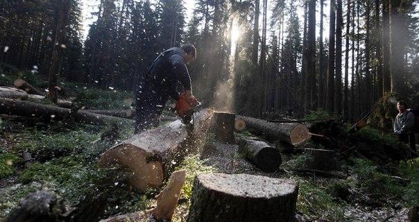 профессия лесоруб