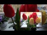 Для всех женщин МИРА!!! Алые тюльпаны. Ян Райбург. @RADA@