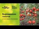 Выращивание томатов (семинар по природному земледелию)