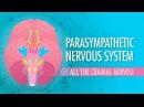 Kids' English | Parasympathetic Nervous System: Crash Course A P 15
