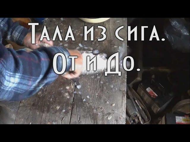 Тала из сига / Тайга моя заветная / 05.06.2014