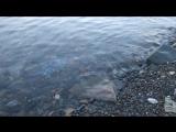 Амурский залив Японского моря... Вот ТО,что я всё никак не могла увидеть за стоящими впереди домами... Эти дивные закаты!... Хва