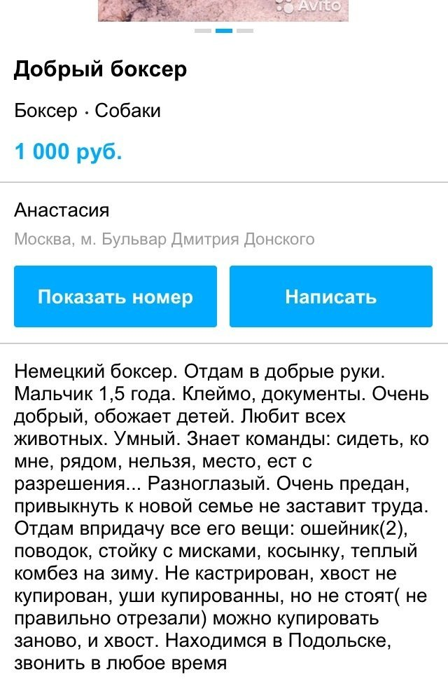Москва, Честер, кобель, д.р. 24.11.2013 6sOmi0XUwVw