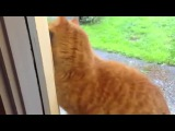 Cat Rings Doorbell (The Imperial March)
