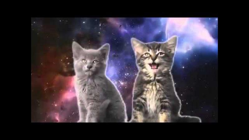 Видео как коты поют..смотреть всем