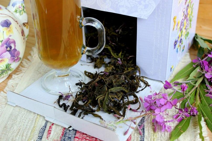Иван-чай или кипрей ферментированный крупнолистовой