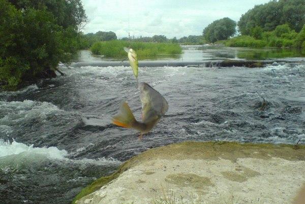 Отчет о рыбалке на пьяне