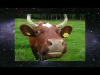 Корова - священное животное. Мистическая сила молока - Часть 1 (Леонид Тугутов)