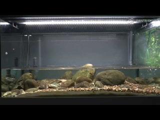 Биотопный аквариум для Homaloptera orthogoniata. Ручей в Юго-Восточной Азии