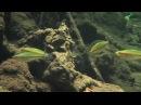 Биотоп радужницы Melanotaenia Ayamaruensis. Остров Новая Гвинея