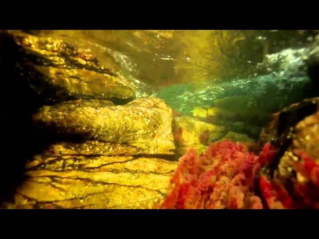 Caño Cristales El Rio Más Hermoso del Mundo Colombia HD