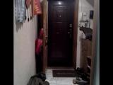 Вот как он это делает!!!! умный кот научился открывать дверь