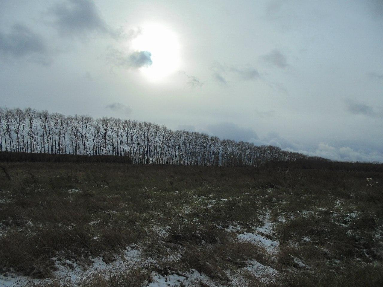 Легенда КП - отдельно стоящее дерево.