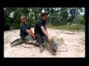 Укротители аллигаторов