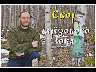 Простой способ добычи берёзового сока (Full HD)