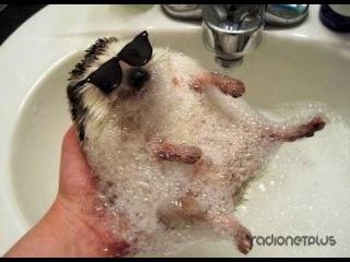 Видео про смешных зверей и  животных
