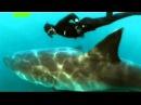 Танец с белой акулой Mike Rutzen Dance with great white shark