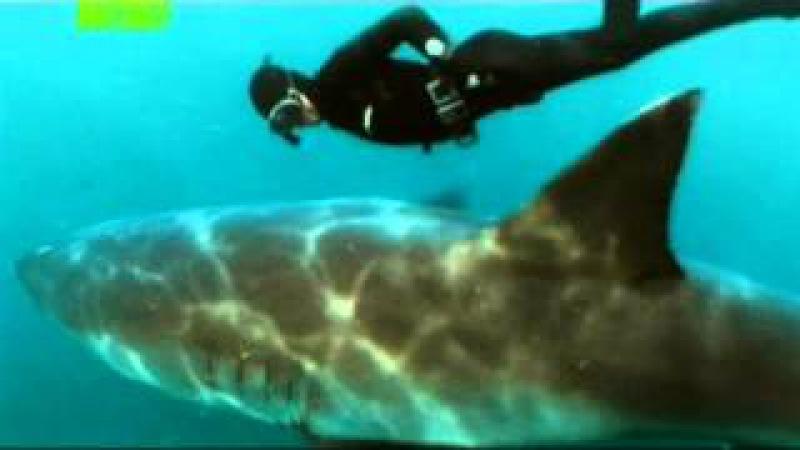 Танец с белой акулой - (Mike Rutzen) - Dance with great white shark