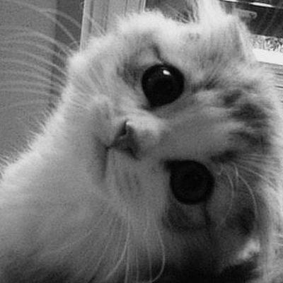 картинки котики на аву